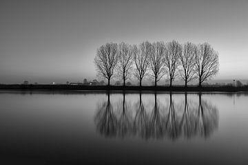 7 bomen IJssel - Dieren van Mart Stevens