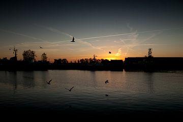 Meeuwen vliegen boven het water bij de haven van Vlissingen van Desiree Meulemans