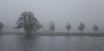 eikenboom in het water von Kaa. M