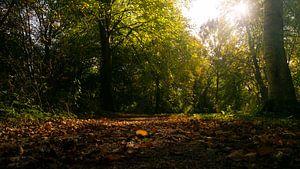 Delftse Herfst van Paul Poot