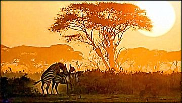 Zebras in der Steppe van