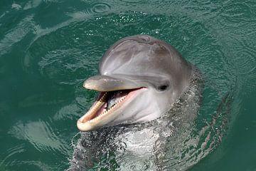 Dolfijn met vis van Antwan Janssen