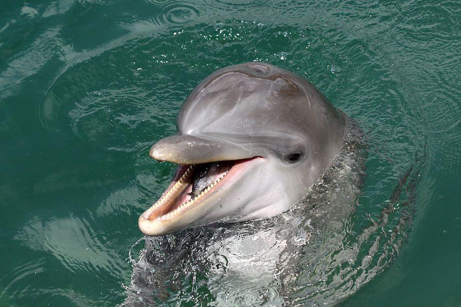Dolfijn met vis