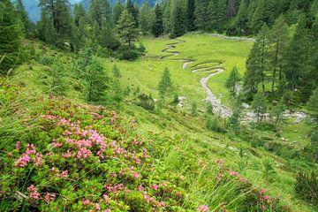 Alpenrose & Bächlein von Coen Weesjes