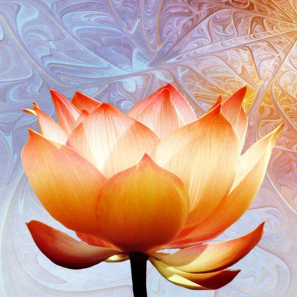 Sunshine Lotus van Jacky Gerritsen