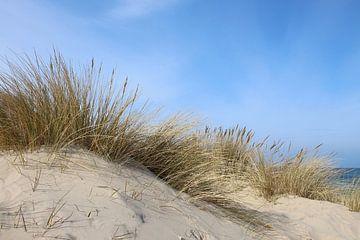 Strandhafer van Ostsee Bilder