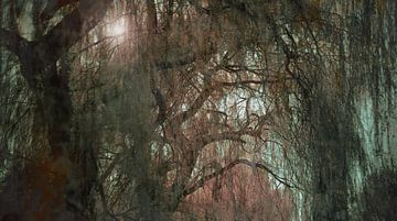 Swamp van Olivier Van Cauwelaert