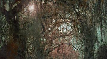 Sumpf von Olivier Van Cauwelaert