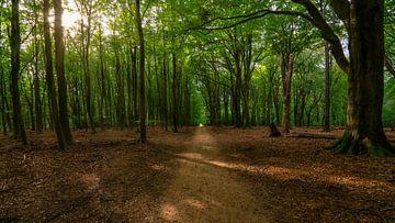Sonnenstrahlen im Speulderbos von Arno van der Poel