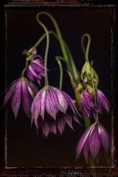 Oude Bloemen 3 van Henk Leijen