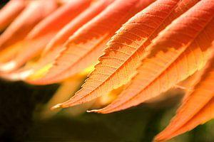 Abstract Nature--Sunlight on Leafs-001 sur Katja Goede