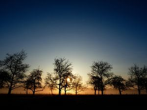 Trees against the sun