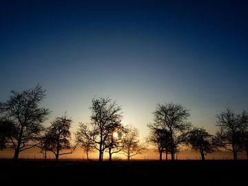 Trees in backlight sur Lex Schulte