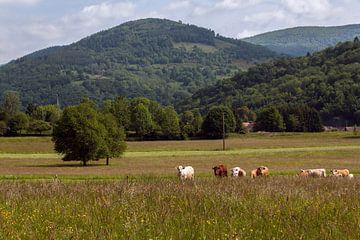 Berg met koeien van Eelke Cooiman