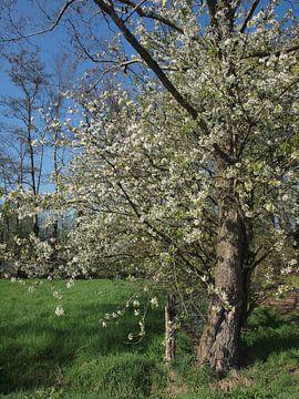 Hollands Landschap voorjaar von Annie Lausberg-Pater
