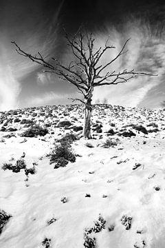 Solitaire boom 2 von Martijn van Huffelen