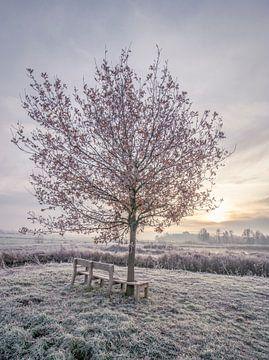 Sonnenaufgang im Winter von Connie de Graaf