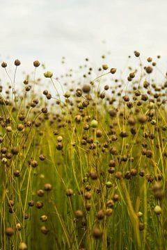 Pflanzen in der Natur von Wouter Kouwenberg