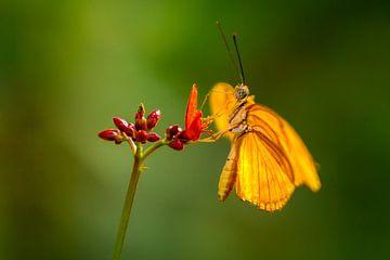 De oranje vlinder van
