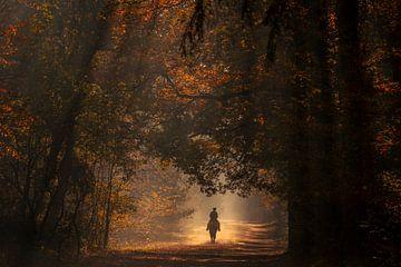 Paard rijden  herfstochtend van Axel Drenth