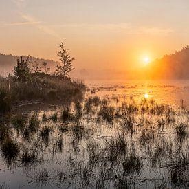 gouden zonsopkomst boven de vijver in de wijers te Limburg, Belgie. van Fotografie Krist / Top Foto Vlaanderen