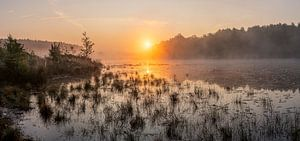 gouden zonsopkomst boven de vijver in de wijers te Limburg, Belgie. van
