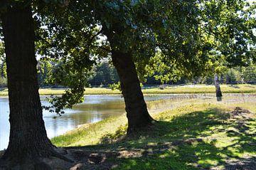 Bomen aan de Waterkant von DoDiLa Foto's