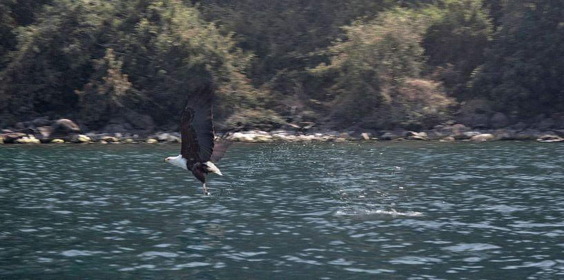 Pro Fishing van BL Photography