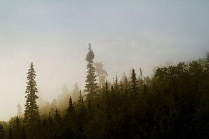 Forêt Noir van