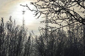 Bomen in de zon met tegenlicht van Juliëtte Even