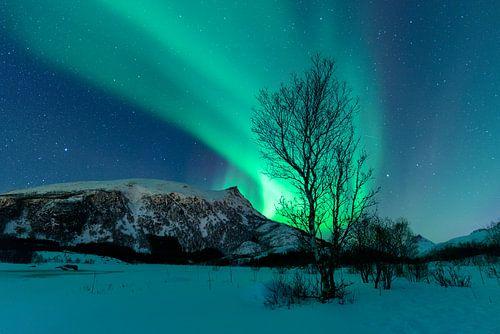 Noorderlicht boven de bergen van de Lofoten in Noorwegen van Sjoerd van der Wal