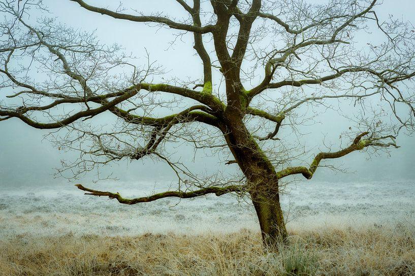 Eikeboom in de mist van Peter Bolman