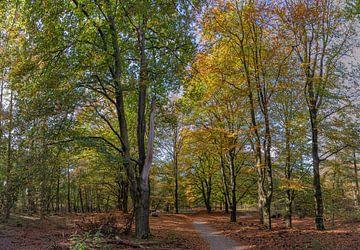 Herbst in Ede, Fahrradweg zwischen den Buchen von Eric Wander
