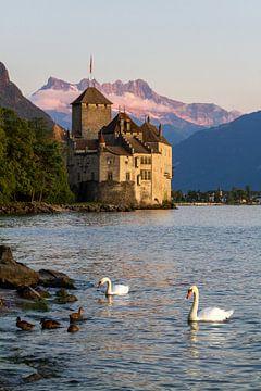 Zwanen nabij Château de Chillon, Montreux Zwitserland van Sebastiaan Terlouw