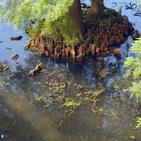 Les racines des arbres dans l'eau I Jardin I Nature I Impression couleur sur Floris Trapman