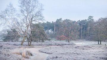 Een klein beetje winter in de Hatertse Vennen van Michel Seelen