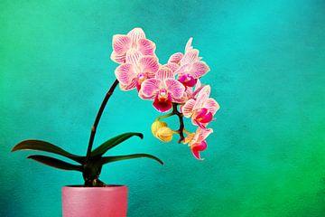 Roze Orchidee van Jan Brons