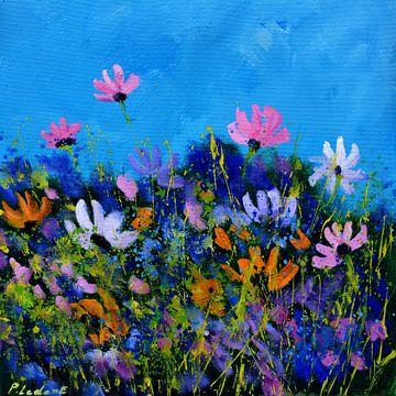 A few cosmos flowers