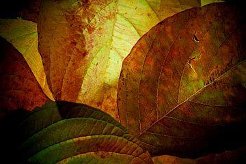 Herfstbladeren 21 van Henk Leijen