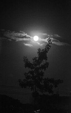 Moon van Lenna Teklenburg