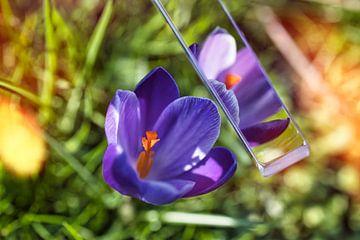 Der Frühling kann beginnen