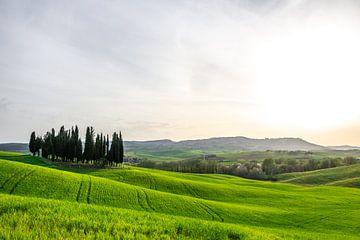 Val D'Orcia in der Toskana von Mickéle Godderis