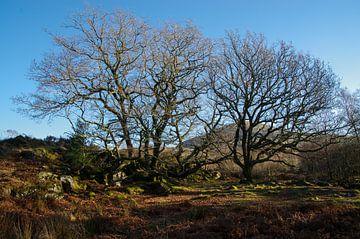 Old trees von Jasper Los