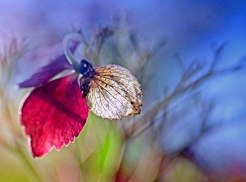 Herfstkleuren van Marlies Prieckaerts