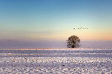 Boompje in de sneeuw van Ellen Gerrits