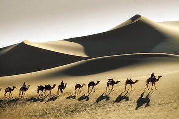 Wüste Sahara, Kamelkarawane und Tuareg-Kameltreiber von Frans Lemmens