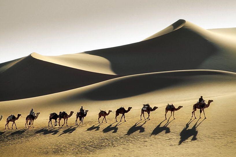 Désert du Sahara, caravane de chameaux et chameliers touaregs sur Frans Lemmens