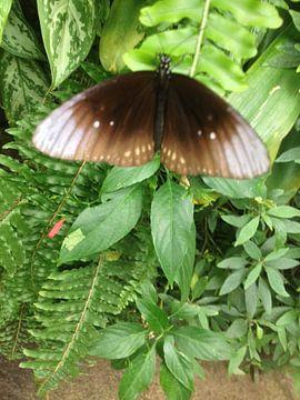 vlinder von John Schouwink