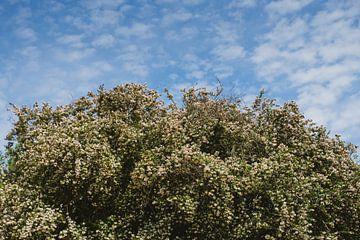 Blütenbaum unter blauem Himmel von Van Kelly's Hand
