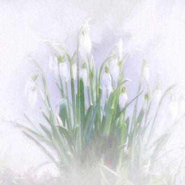snowdrops von Yvonne Blokland